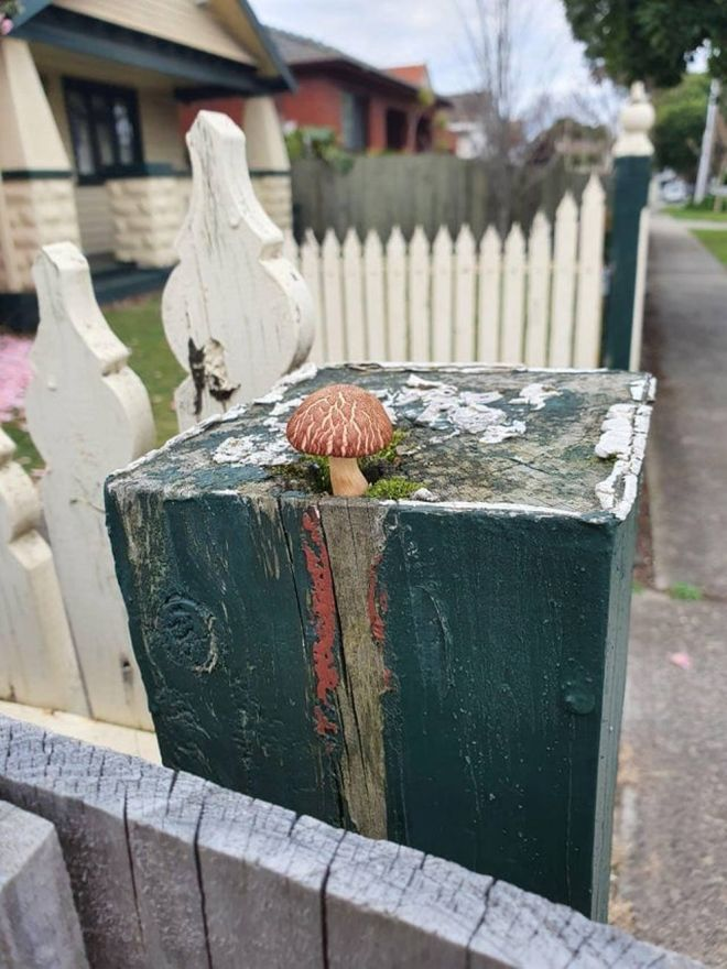 гриб на заборе