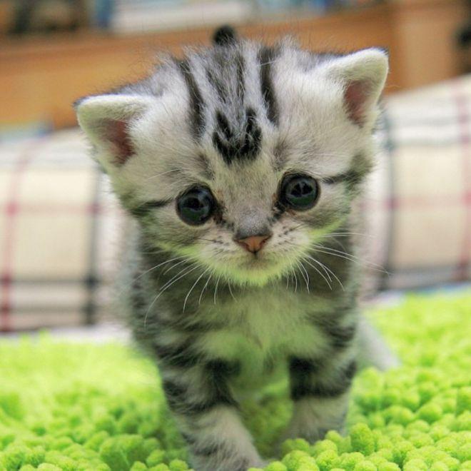 шеф двое картинки про грустного котенка гораздо удобнее выполнять
