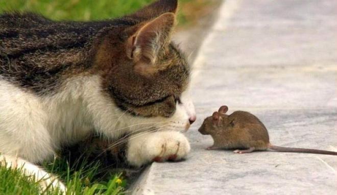 Кошка, которая поймала самое большое количество мышей