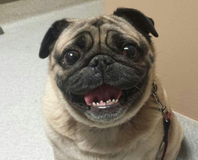 самая обаятельная улыбка
