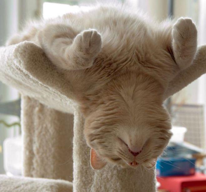 Сон по-кошачьему фен-шую