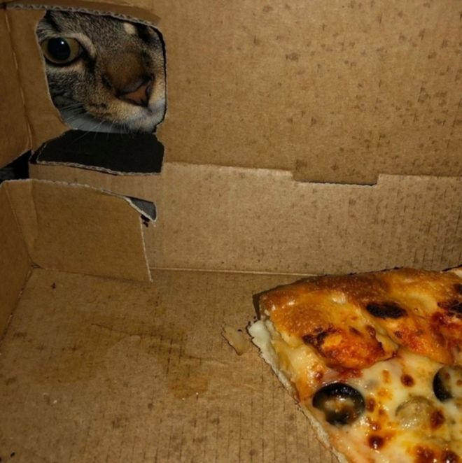 кот и пицца