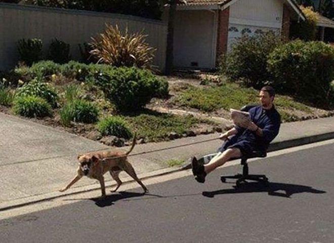 Собака и хозяин на стуле