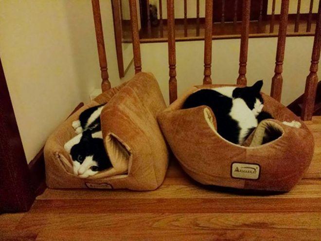 лежат на домиках