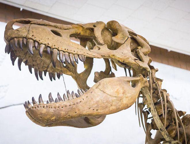 заработок на динозаврах