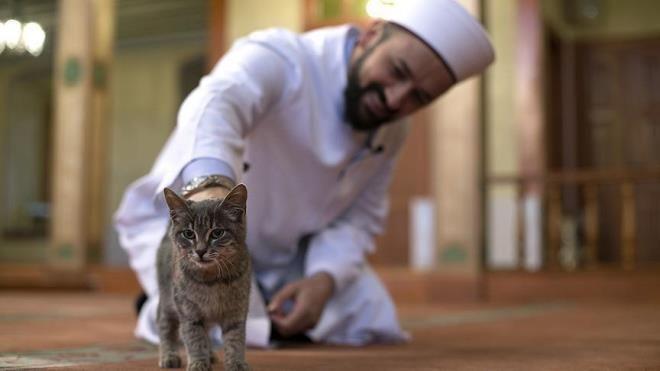кошка в мечеть