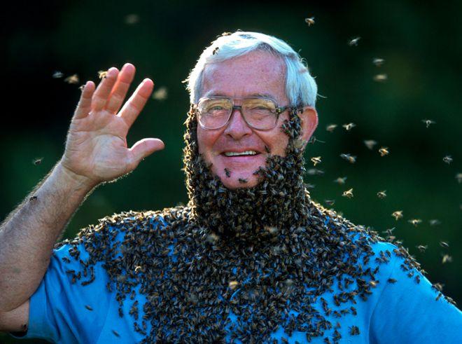 король пчел