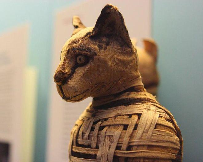 кошка мумия
