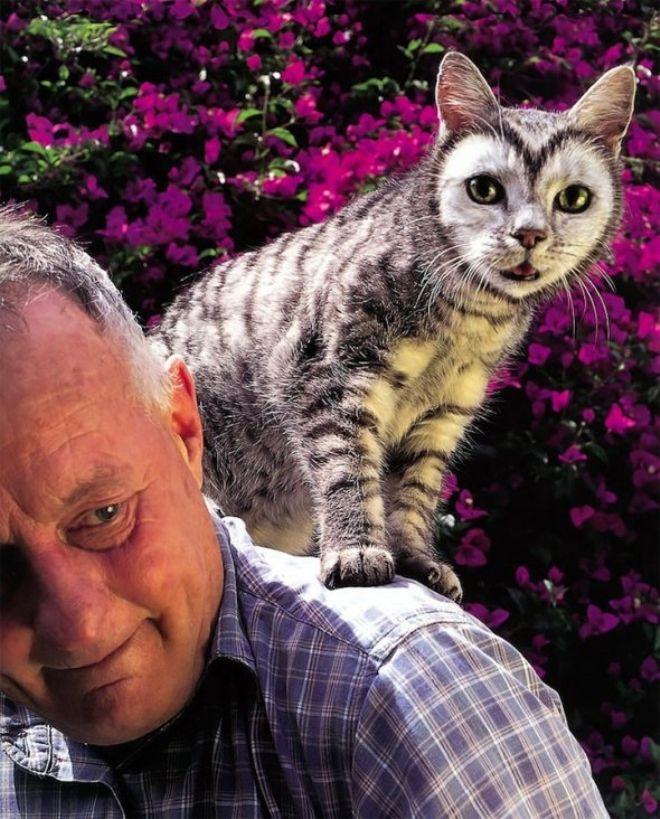 Невероятные картинки котов