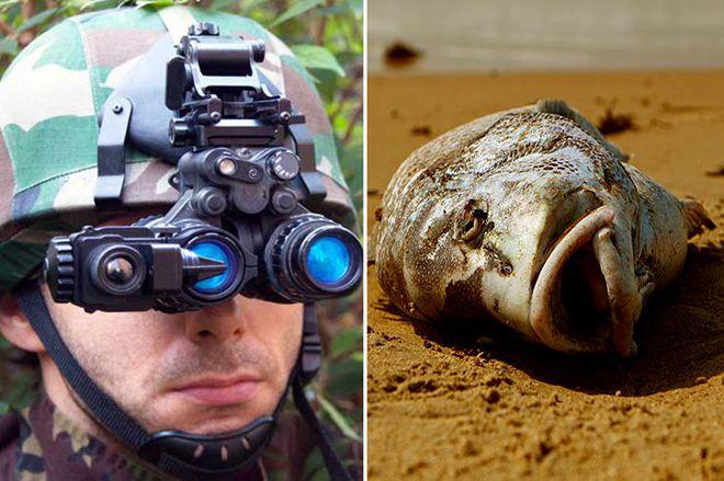 гниющая рыба заменит