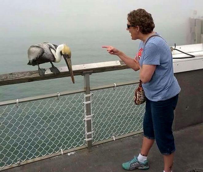 отчитала пеликана