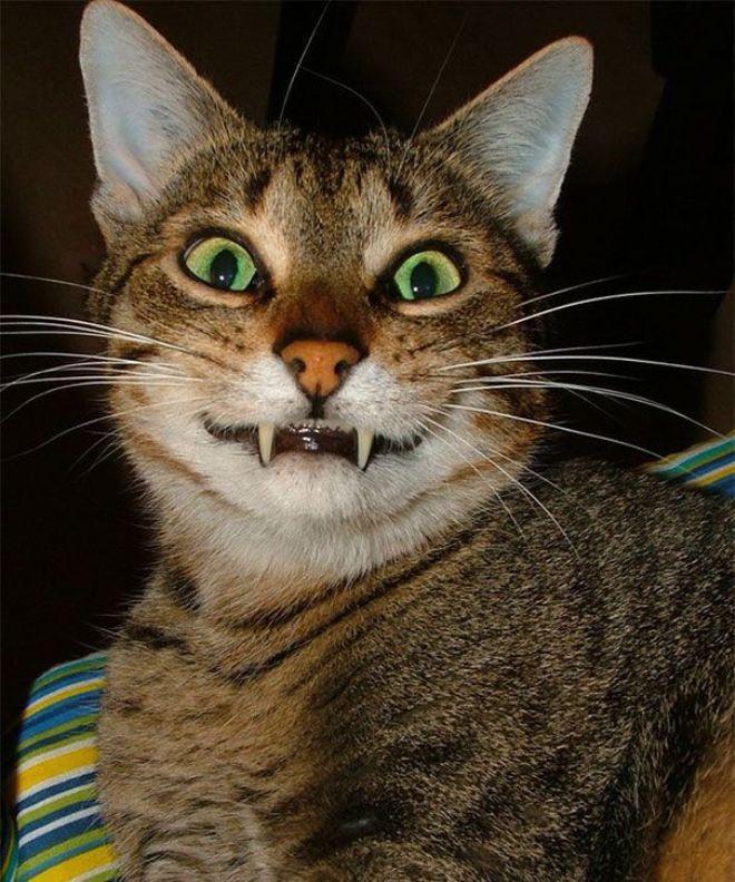 картинки улыбающиеся коты помню, какие-то