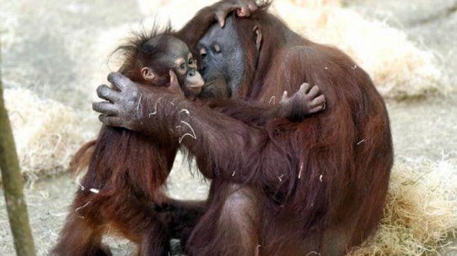 Материнская любовь и забота