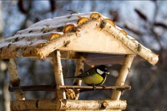 Сделать кормушку для птиц