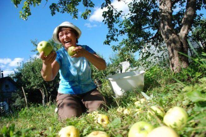 скушай яблочко
