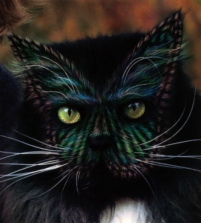 картинки необычного кота эти скалы