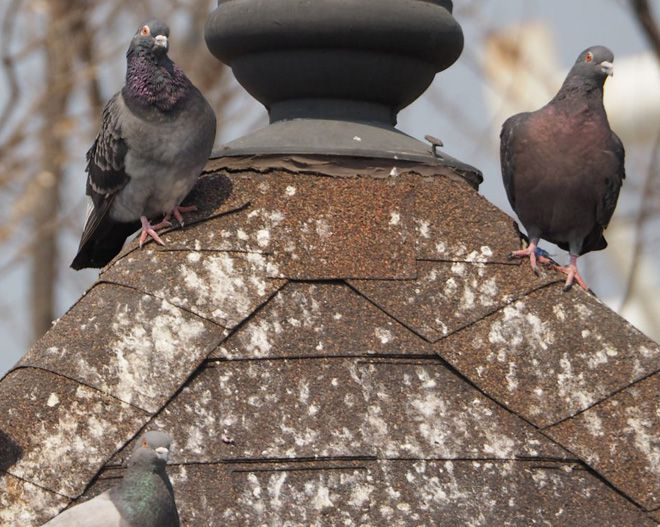 удаление птичьего помета