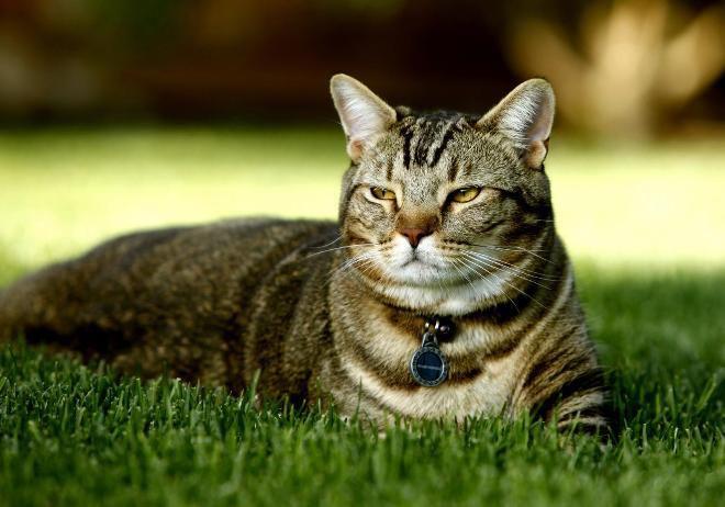 Котики в США