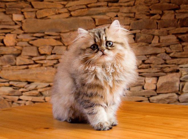 самая популярная кошка