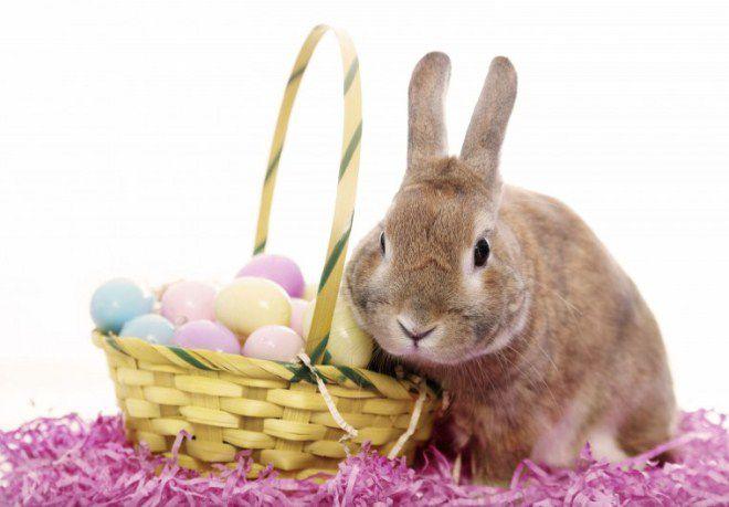 католики верят, что яйца сносит кролик