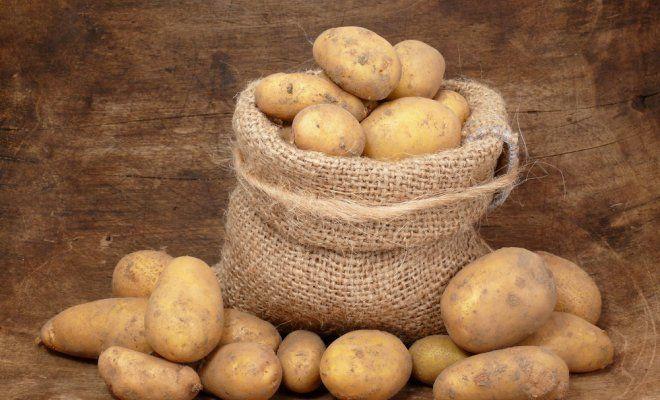 нельзя иметь в доме более 50 кг картофеля