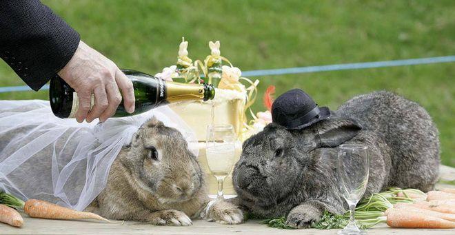 унылые кролики