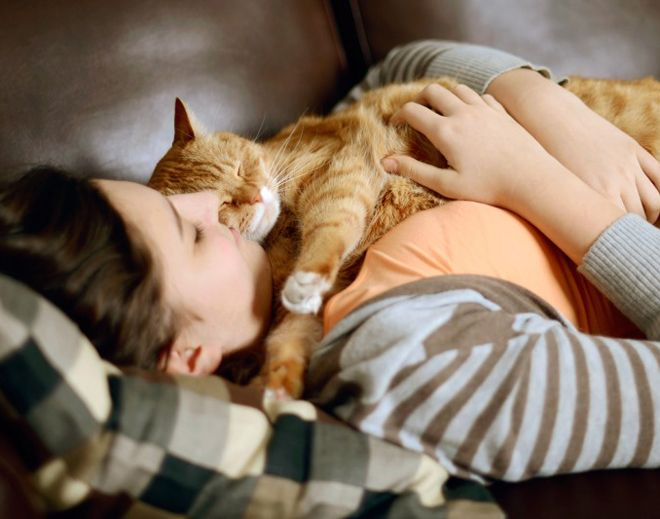 кошка с хозяином