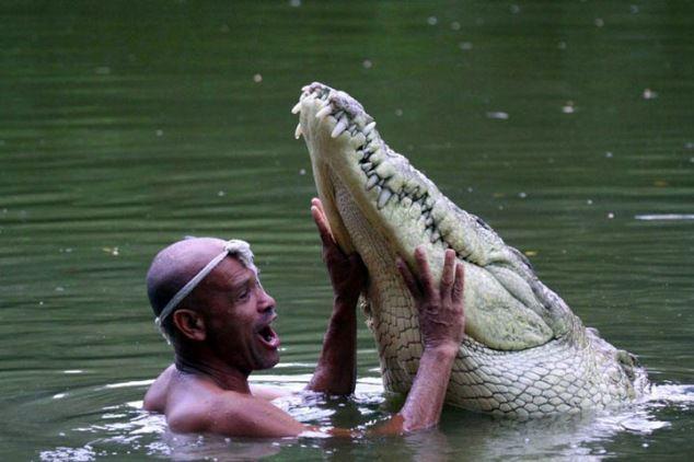 Самый ласковый крокодил 1