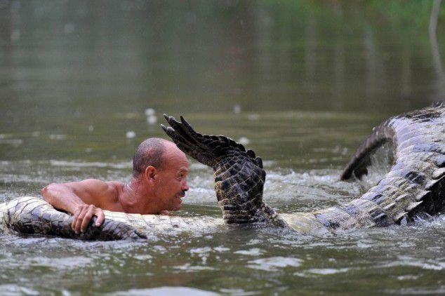 Самый ласковый крокодил 4