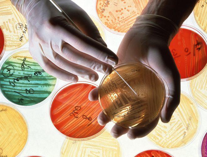 устойчивость к антибиотикам