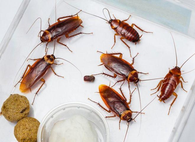 антибиотик от таракана