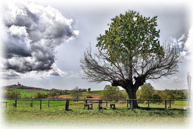 Двойное дерево
