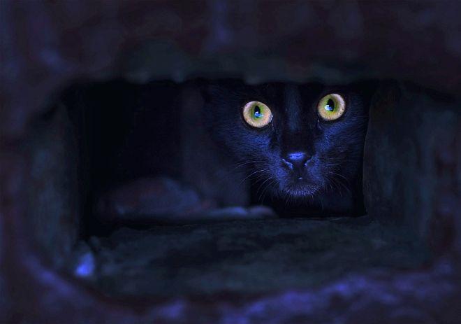 кошка видит ночью