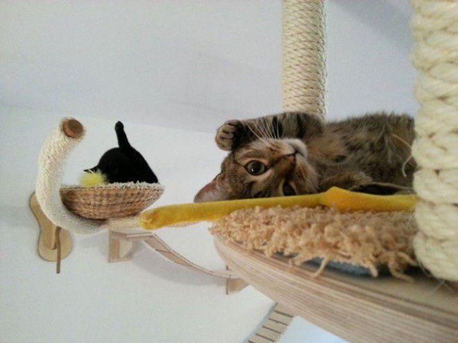 котики в Бразилии