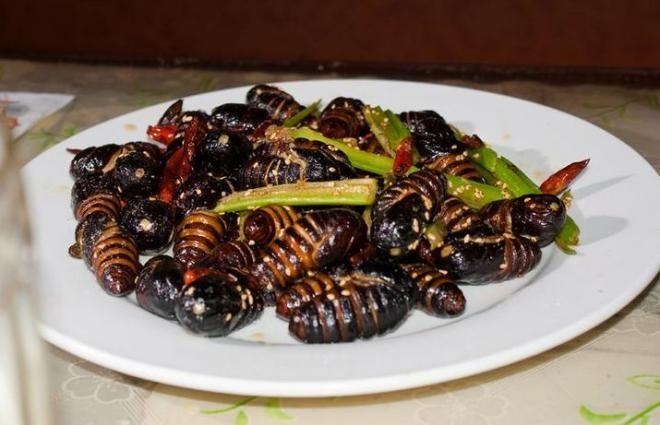 Личинки тутового шелкопряда