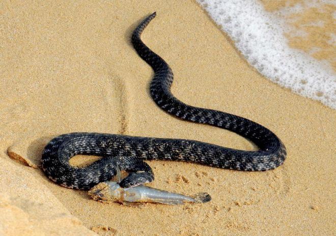 ставится какие змеи обитают на мальдивах фото развития