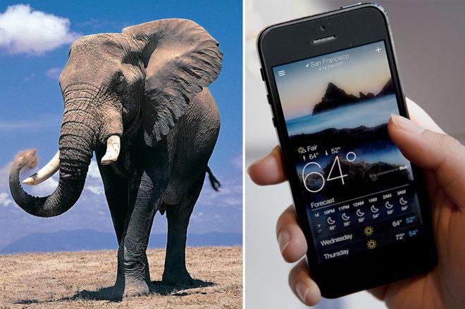 слон отличный метеоролог
