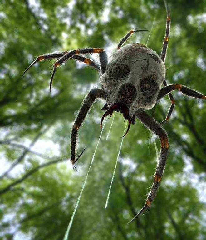 Картинки с пауками с названиями