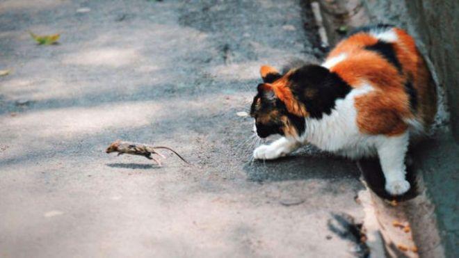 Кот с мышкой