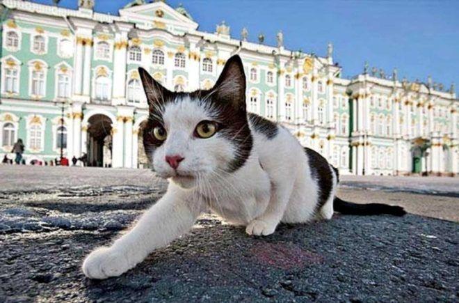 Котик из Эрмитажа