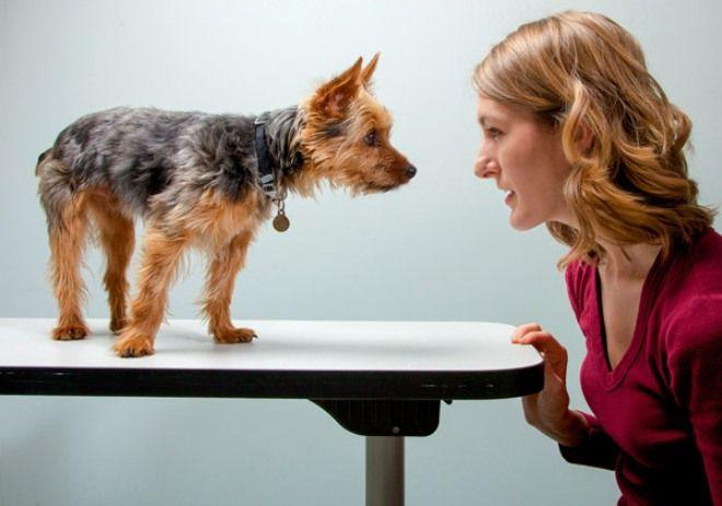 Собаки решают проблемы коммуникаций