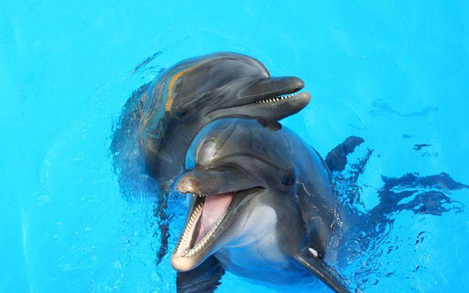 10 доказательств разумности животных Delfiny_1