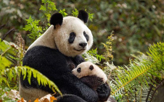 10 доказательств разумности животных Pandy
