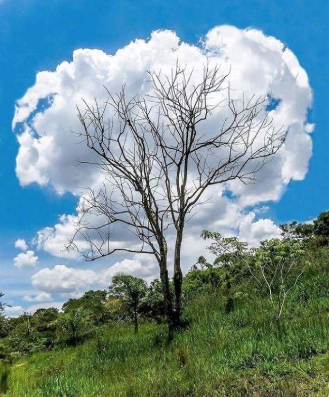 Дерево-облако