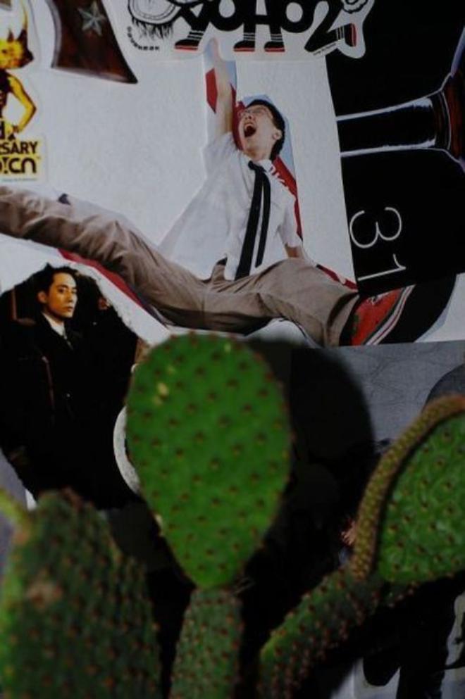 Фото и кактус