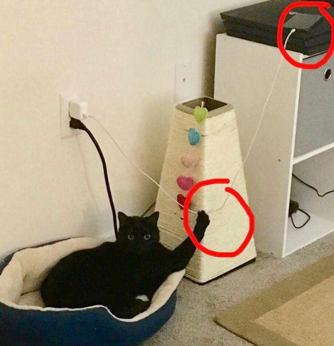 Кот и лапы