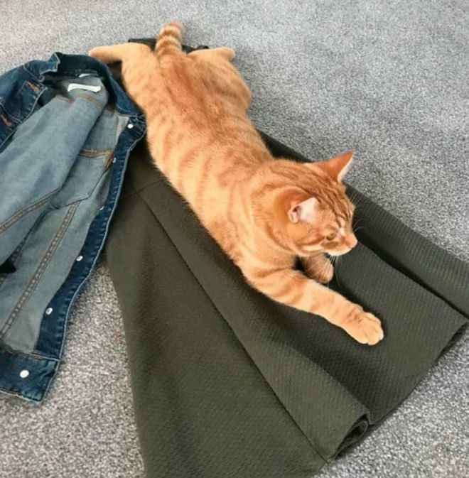 Кот на одежде
