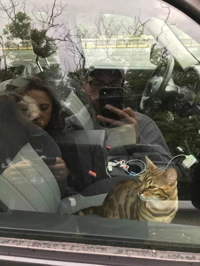 Кот заблокировал дверь