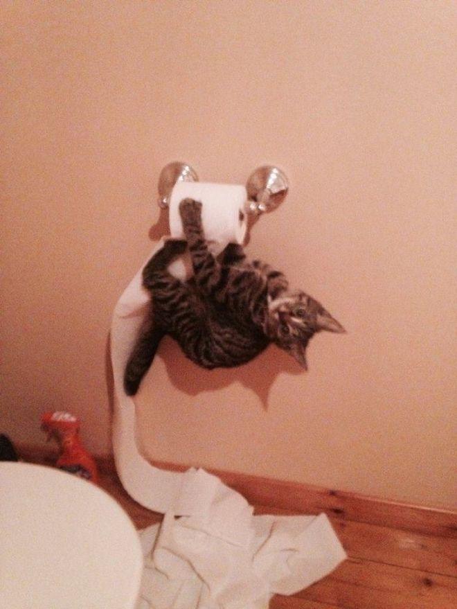 Котенок на бумаге