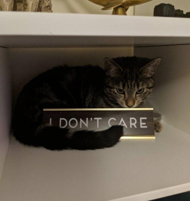 «Мне все равно»